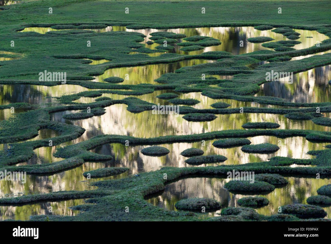 Sunlit mountainside reflected in a wetland in Oregon's Wallowa Mountains. - Stock Image