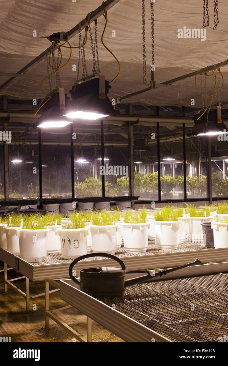 Production hall of ecological farming university, Witzenhausen, Hesse, Germany - Stock Image