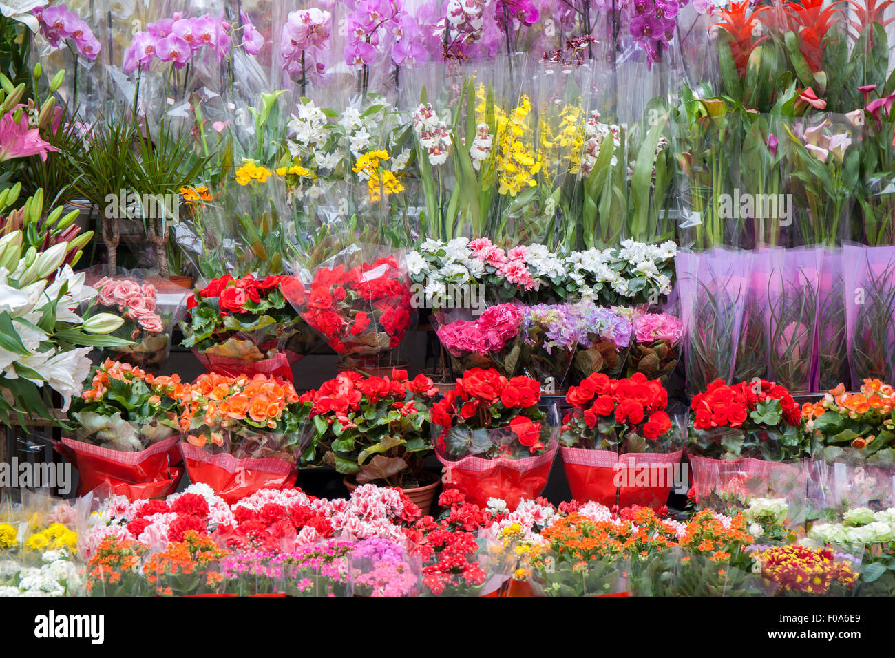 Color image of many different kind of flowers arranged on flower ...