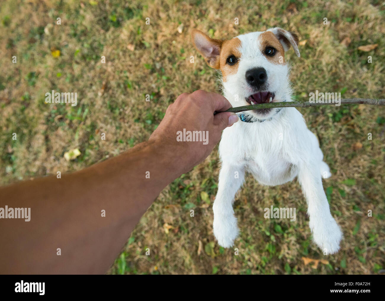 how to stop a puppy from jumping up and biting