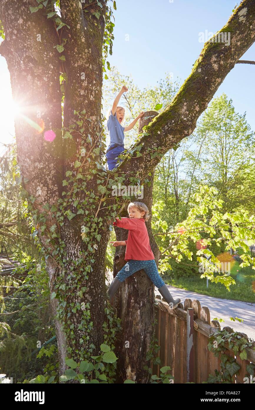 Two young boys climbing tree - Stock Image