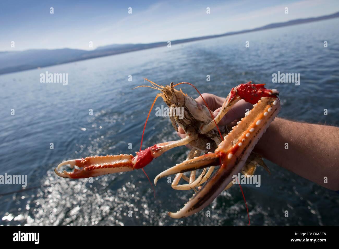 Fisherman holding up shellfish, Isle of Skye, Scotland - Stock Image