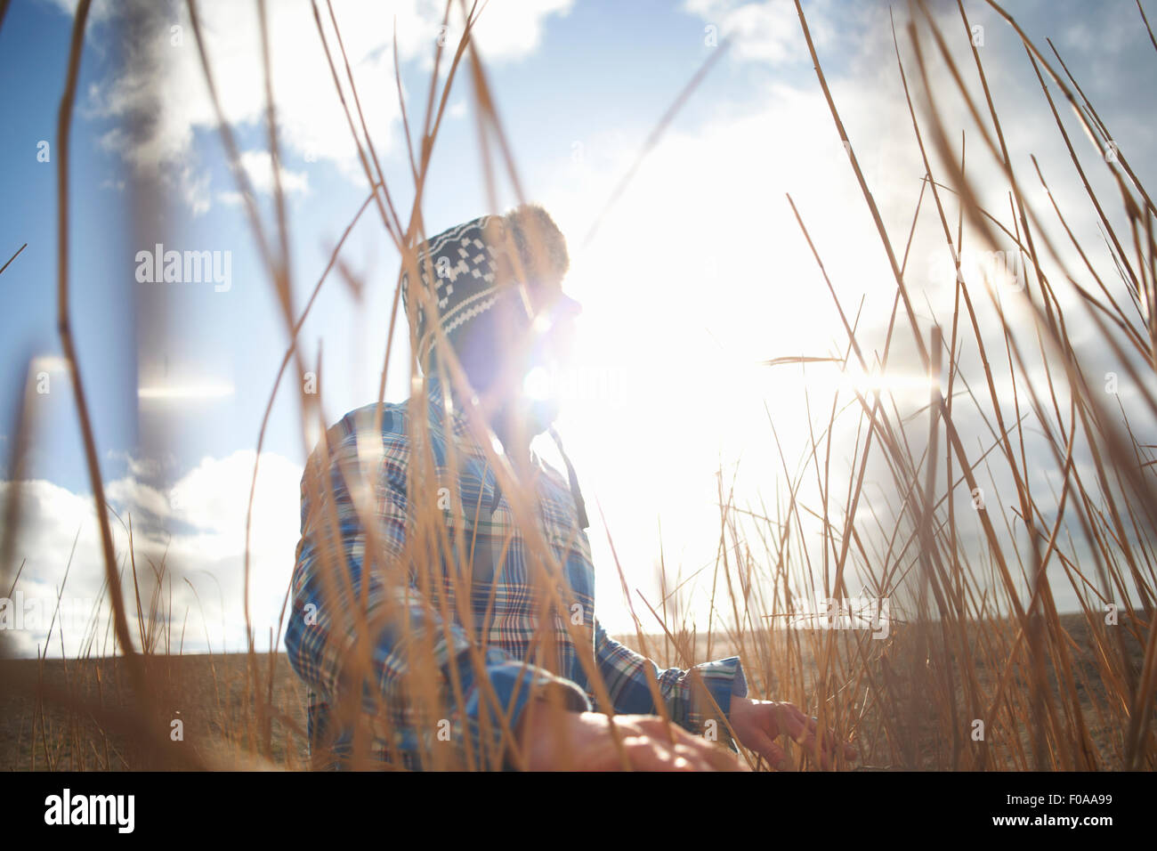 Mature man looking out from sunlit reeds - Stock Image