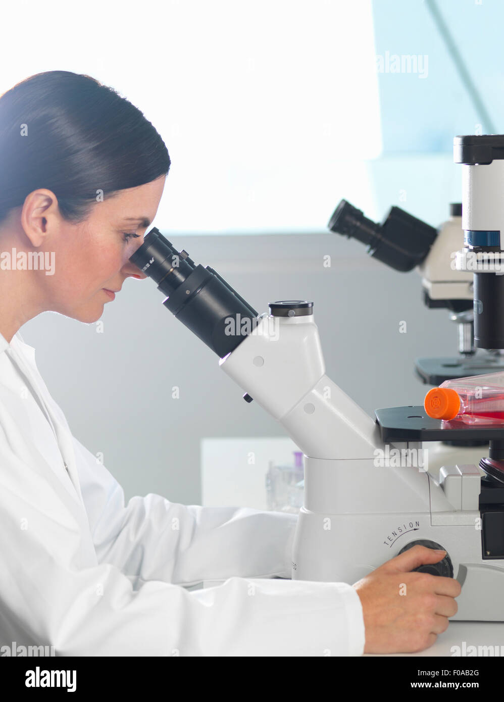 Scientist viewing cultures under inverted microscope for medical and pharmaceutical research - Stock Image