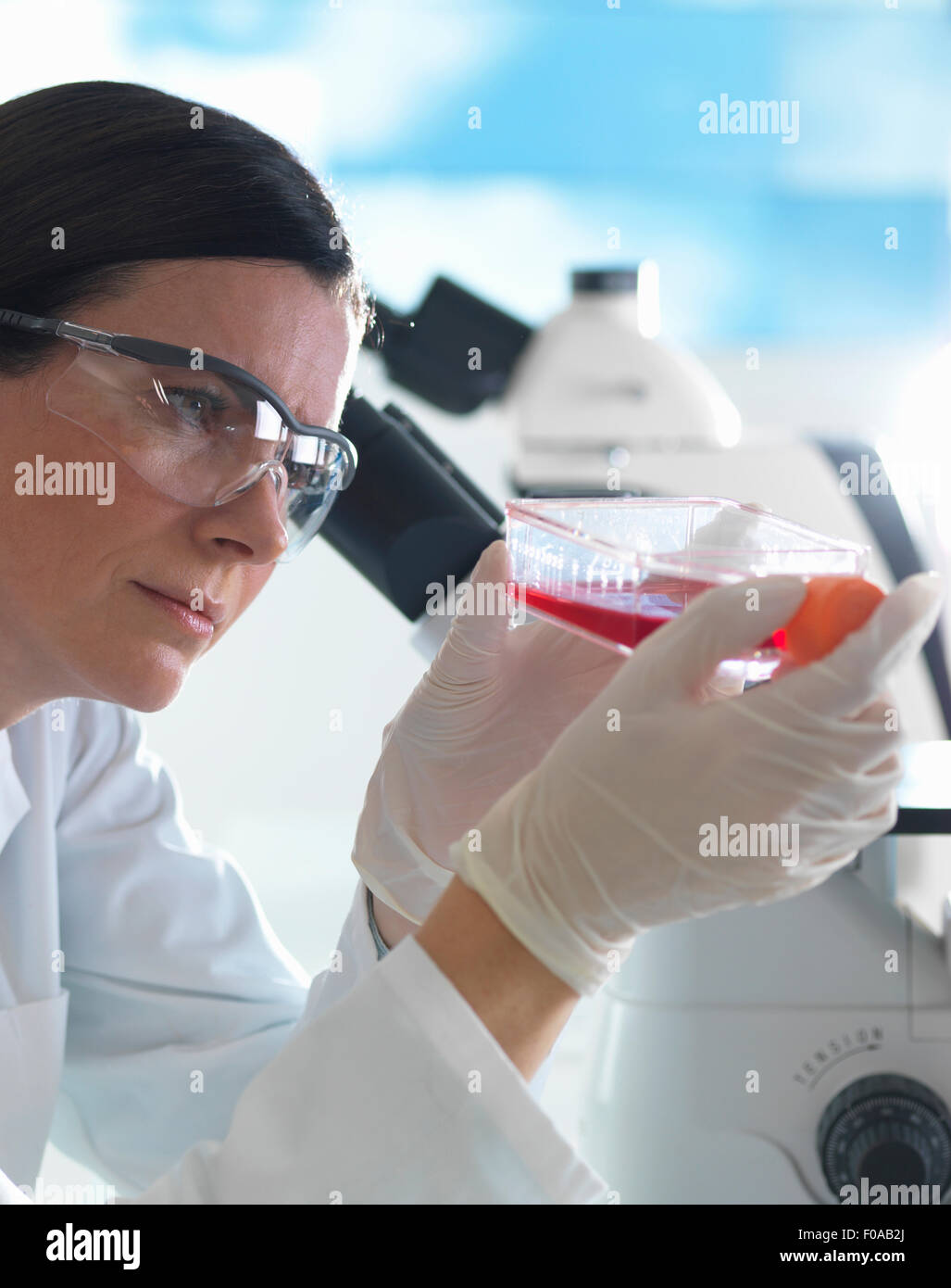 Female cell biologist holding flask containing stem cells, cultivated in red growth medium - Stock Image