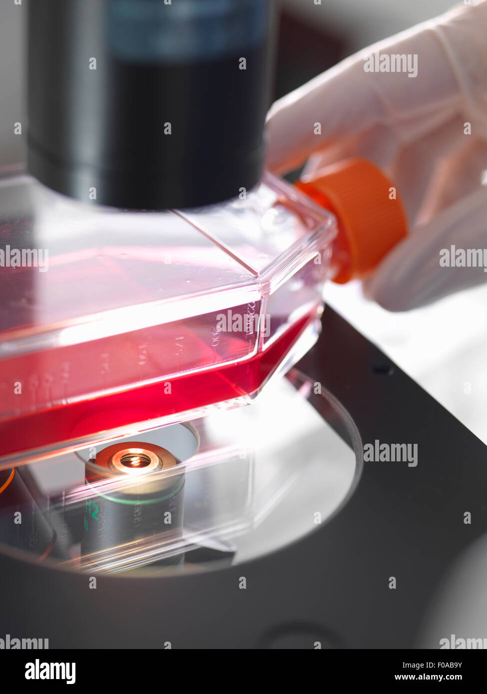 Flask containing cultures sitting on platform of inverted microscope in lab - Stock Image