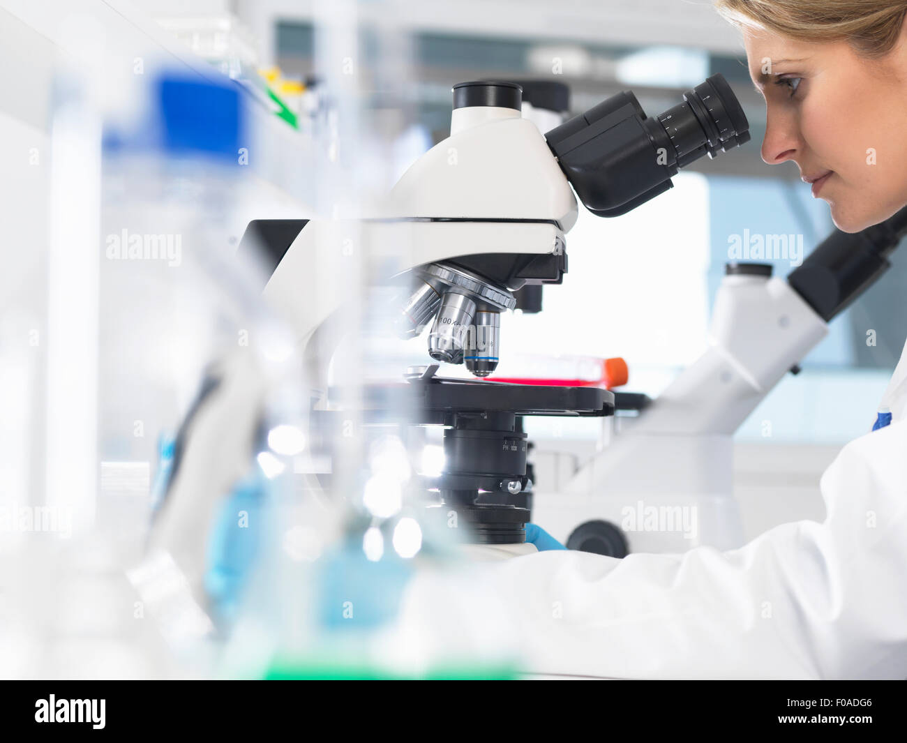 Medical scientist viewing sample slide under a microscope in a laboratory - Stock Image