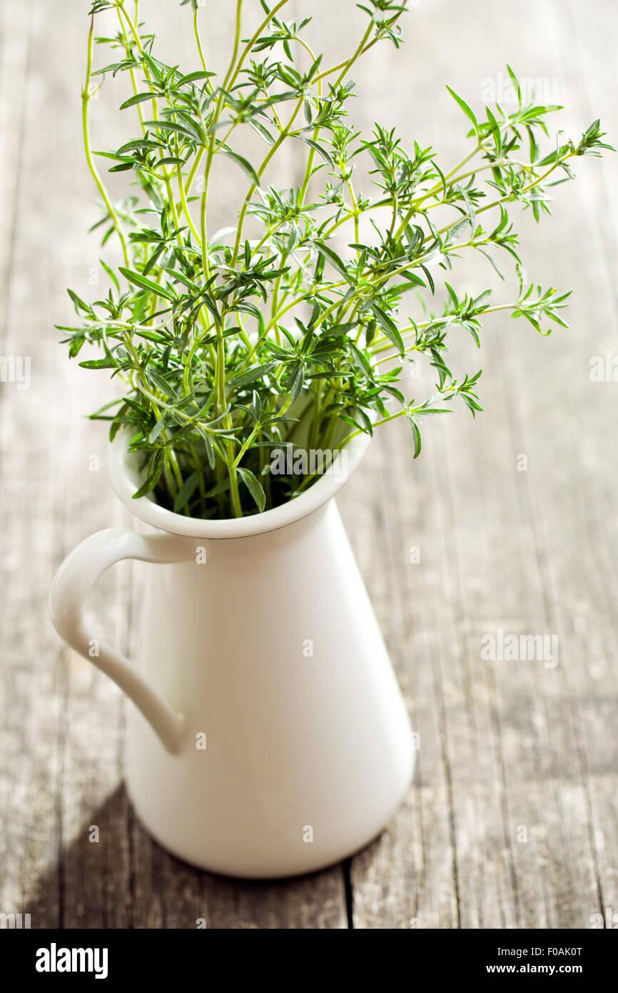 Fresh savory bunch in vase - Stock Image