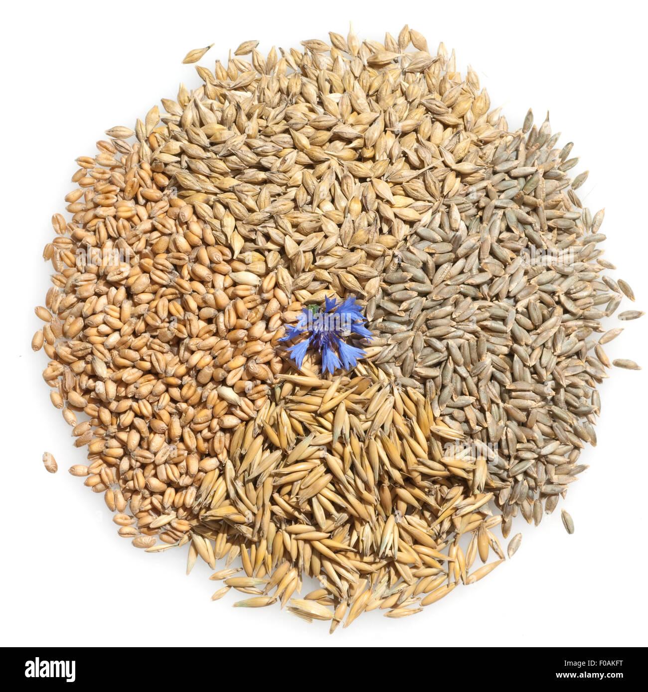 Getreidesorten, Getreide, Getreidekoerner; Stock Photo
