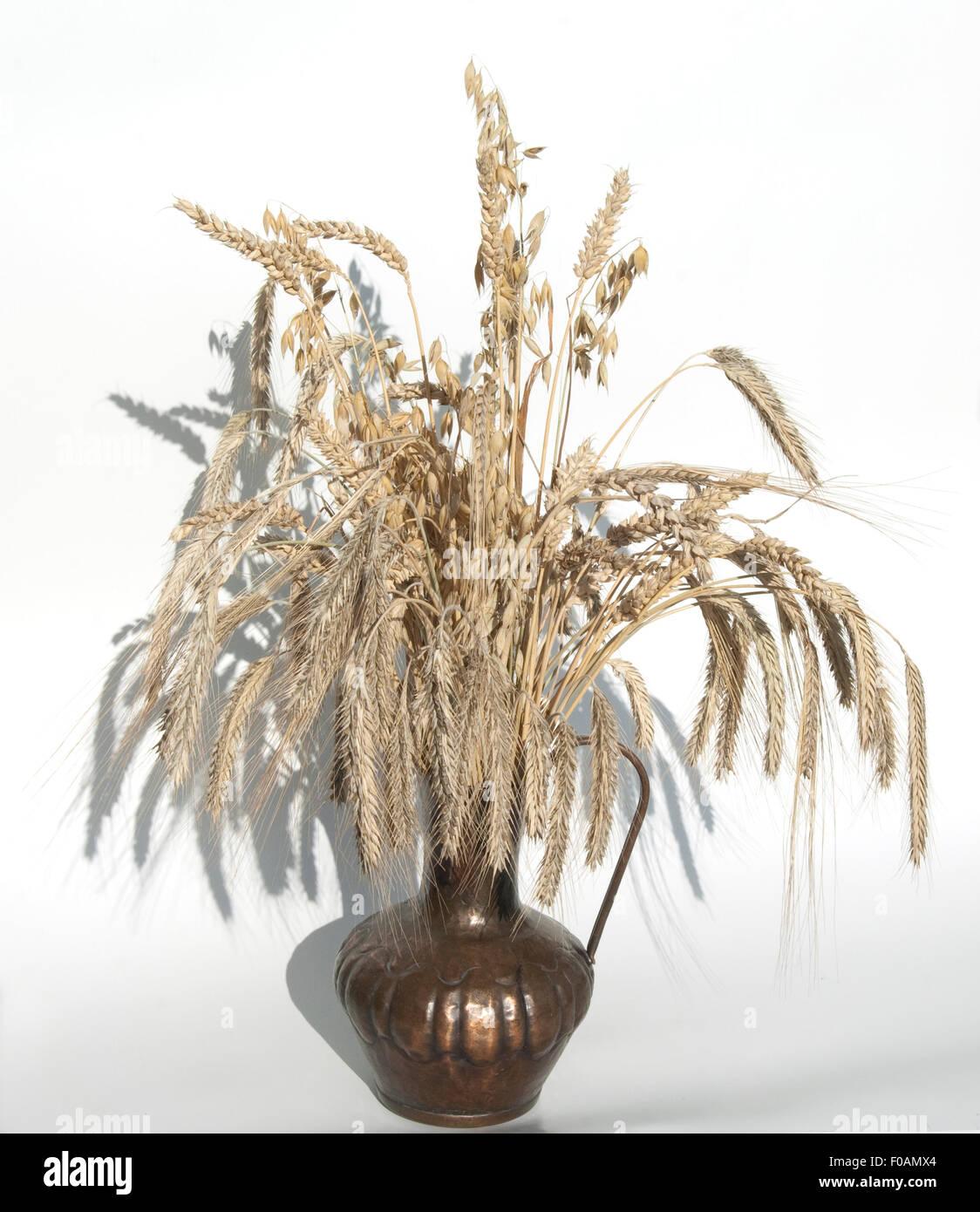 Getreidestrauss - Stock Image