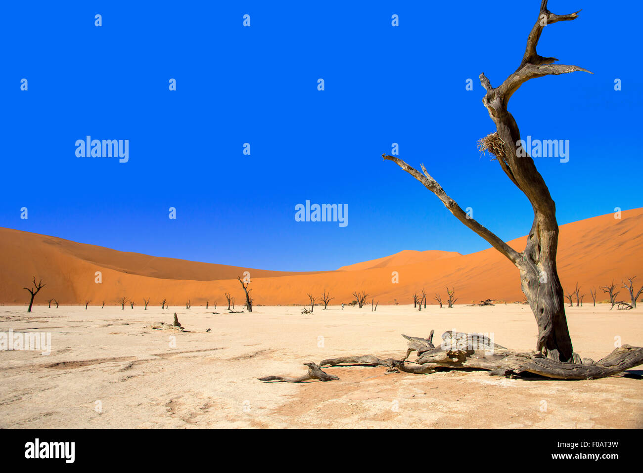 The Dead Viei (DeadVlei) Pan, Namib-Naukluft National Park, Sossusviei, Namib Desert, Hardap Region, Republic of - Stock Image