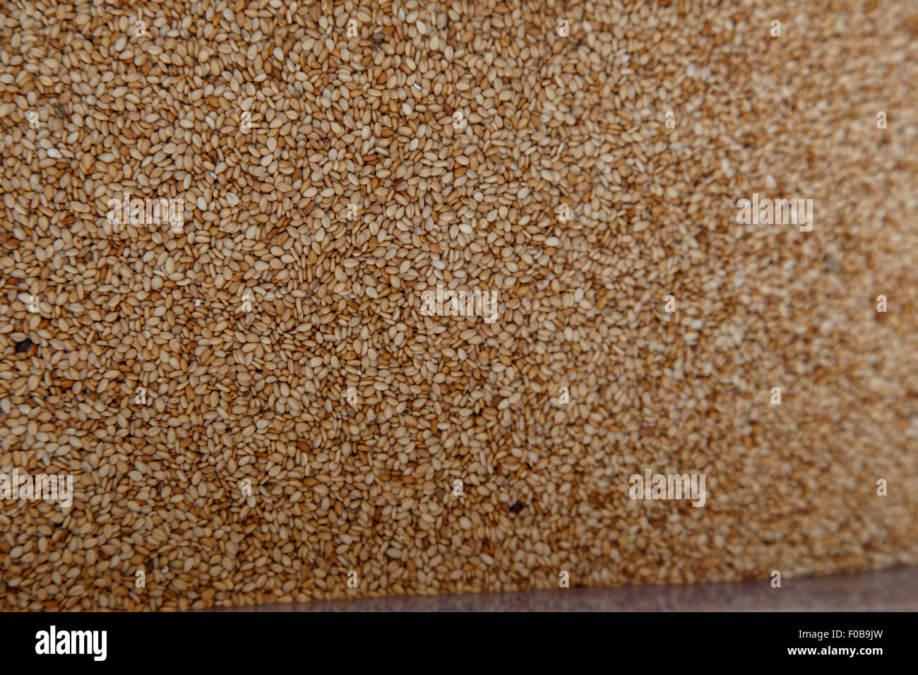 Closeup of lots of toasted sesame seeds - Stock Image