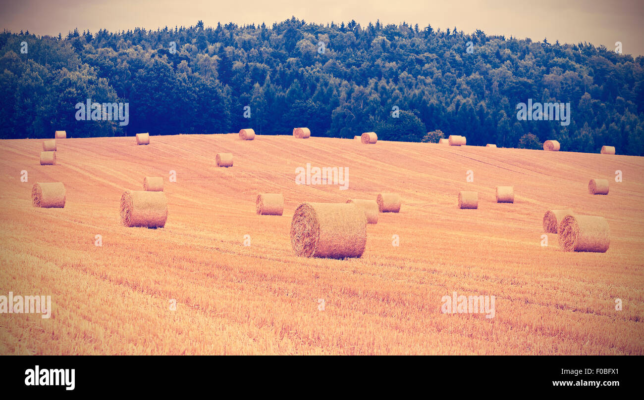 Vintage toned hay bales on harvested field, shallow depth of field. Stock Photo
