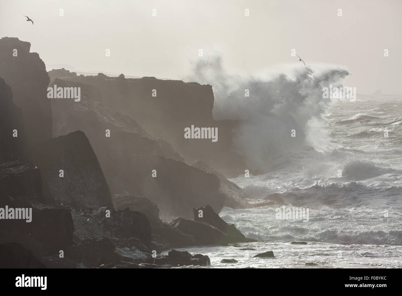 Big waves breaking on cliffs during winter storm on the west coast of Ireland. - Stock Image