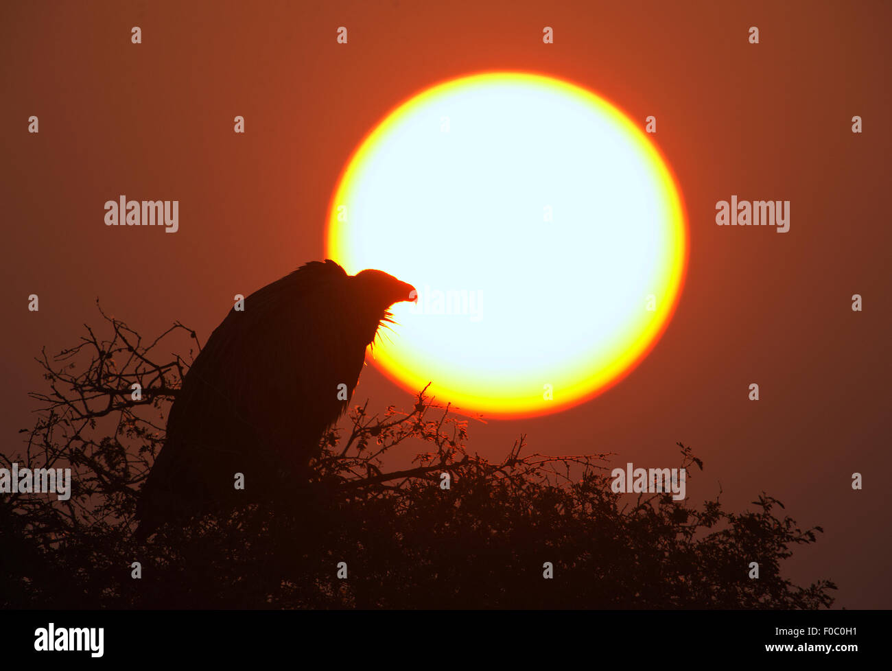 The image was shot near BIkaner-Rajsthan-India - Stock Image