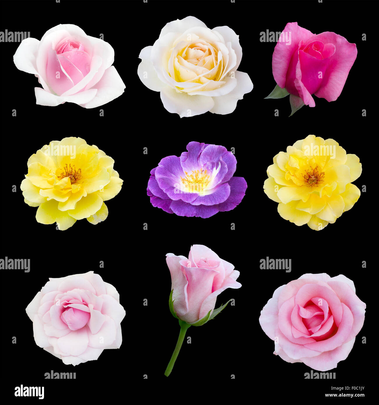 collage of nine roses - Stock Image