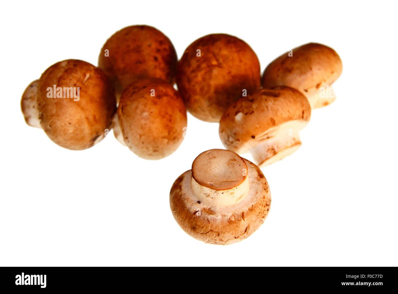 Plize: Champignons - Symbolbild Nahrungsmittel. Stock Photo