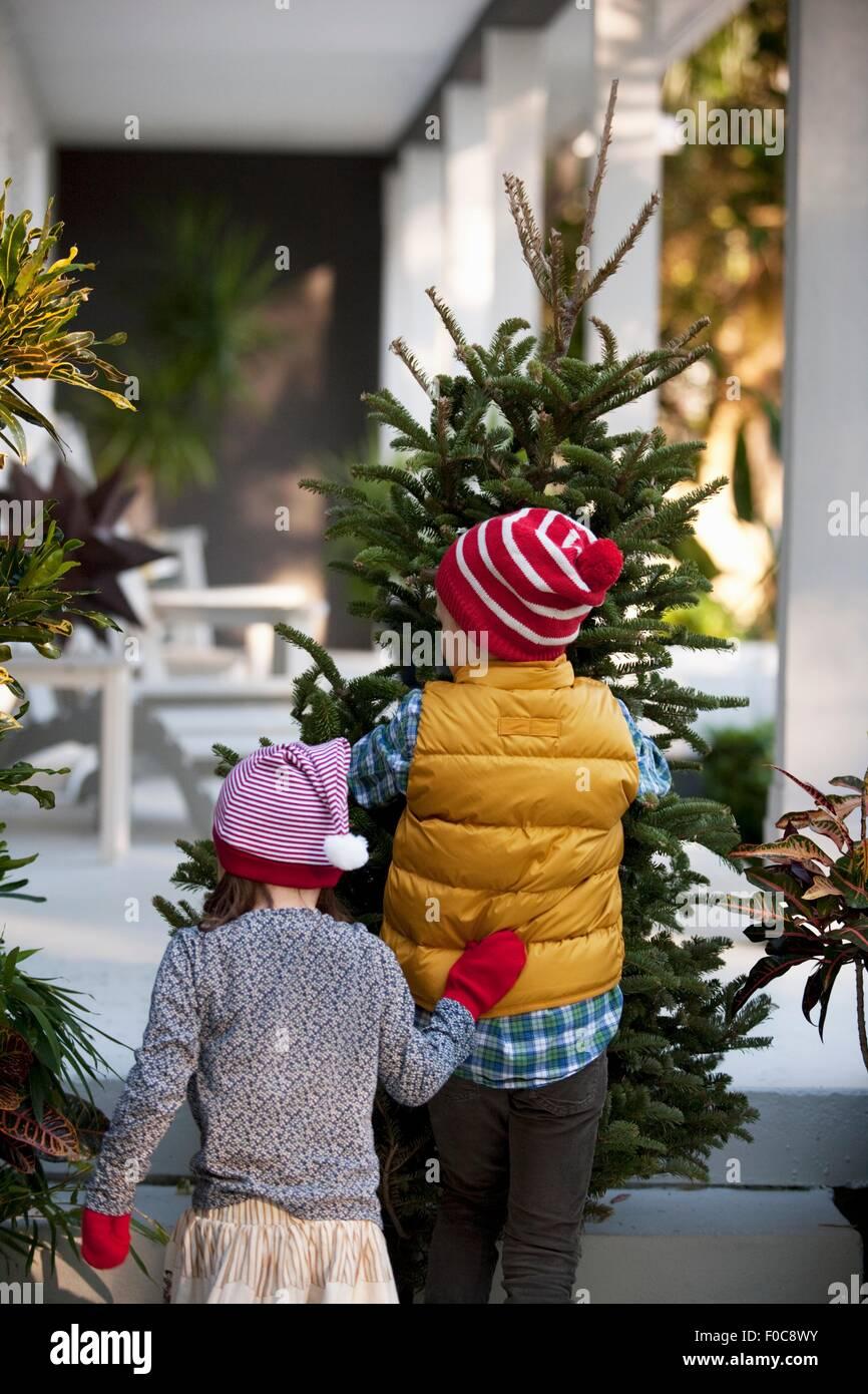 Girl and boy carrying christmas tree - Stock Image