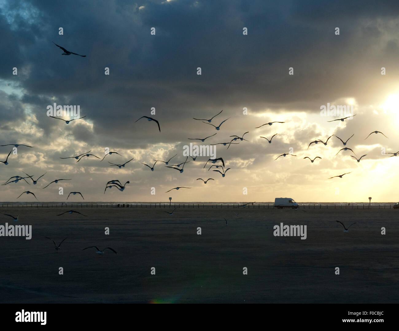 Strand, Sankt Peter-Ording, - Stock Image