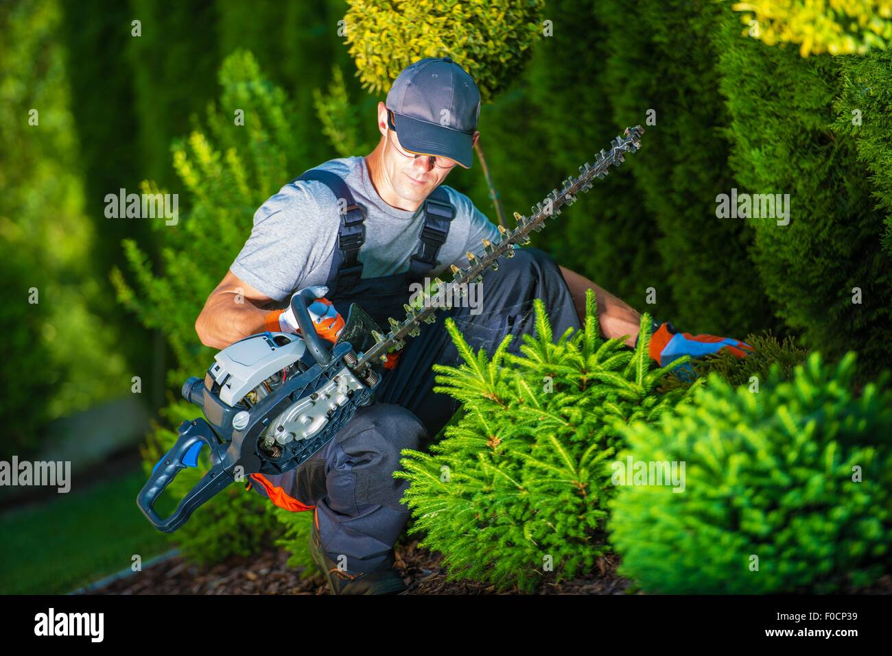 Trimming Works in a Garden. Professional Gardener with His Pro Garden Equipment During His Work. Gasoline Plants - Stock Image