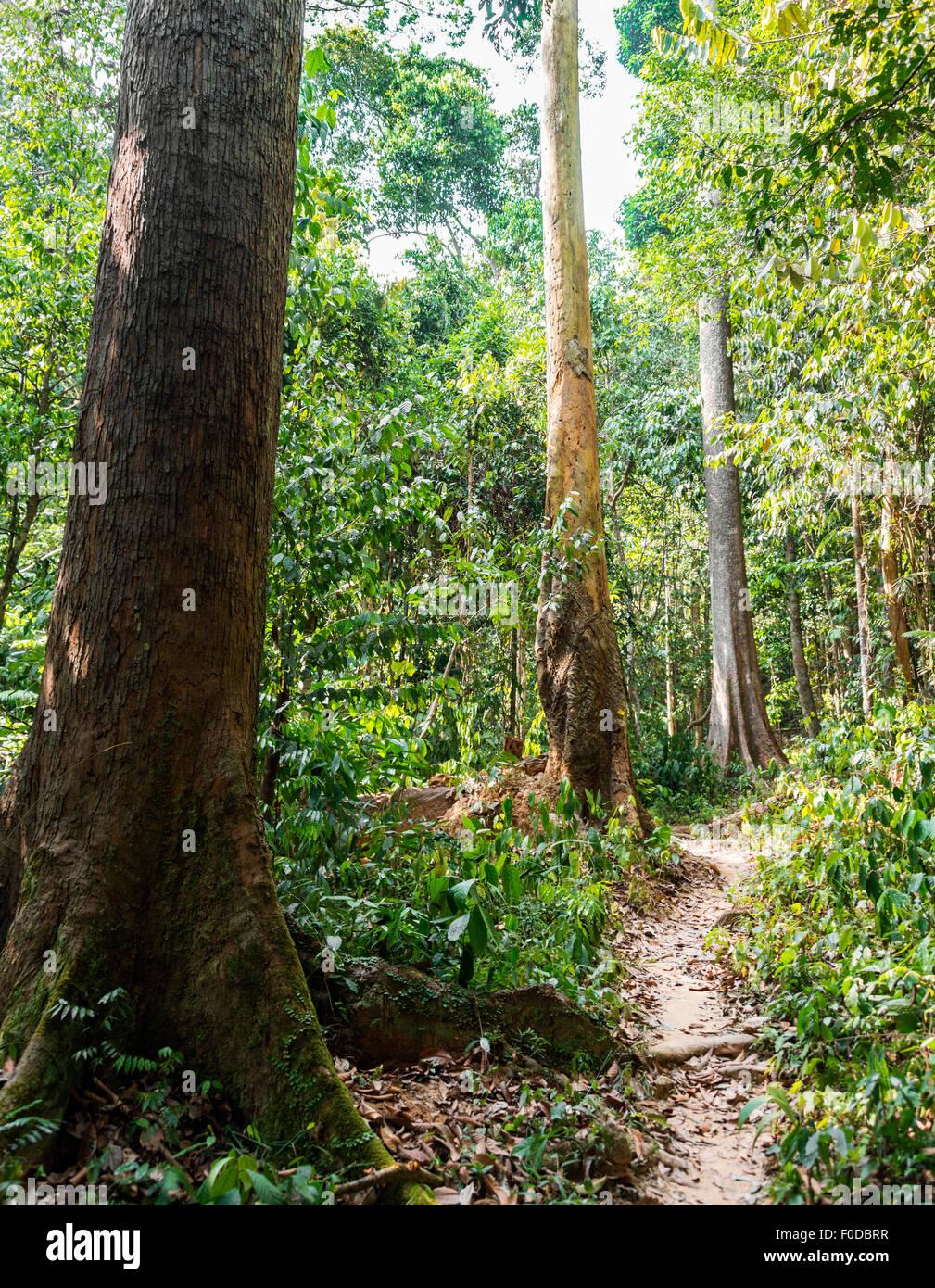 Trail in the jungle, Kuala Tahan, Taman Negara, Malaysia - Stock Image