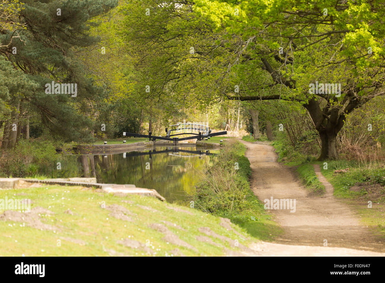 A view of the Basingstoke Canal of a lock, under Spring foliage. - Stock Image