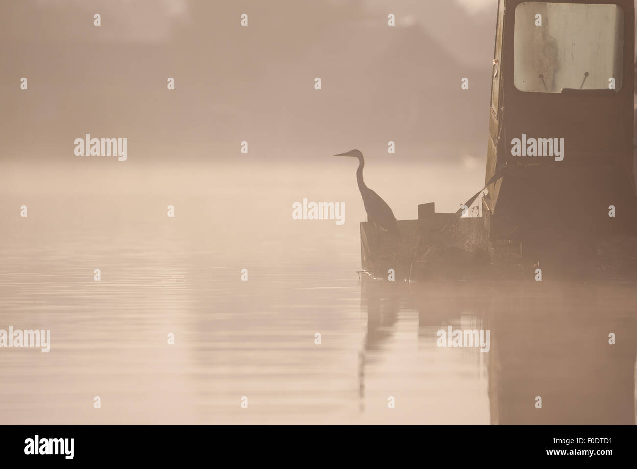 A grey heron sits upon a barge in the mist Stock Photo