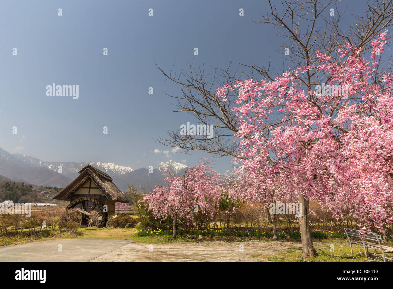 Cherry blossoms and water wheel house in Japan - Stock Image