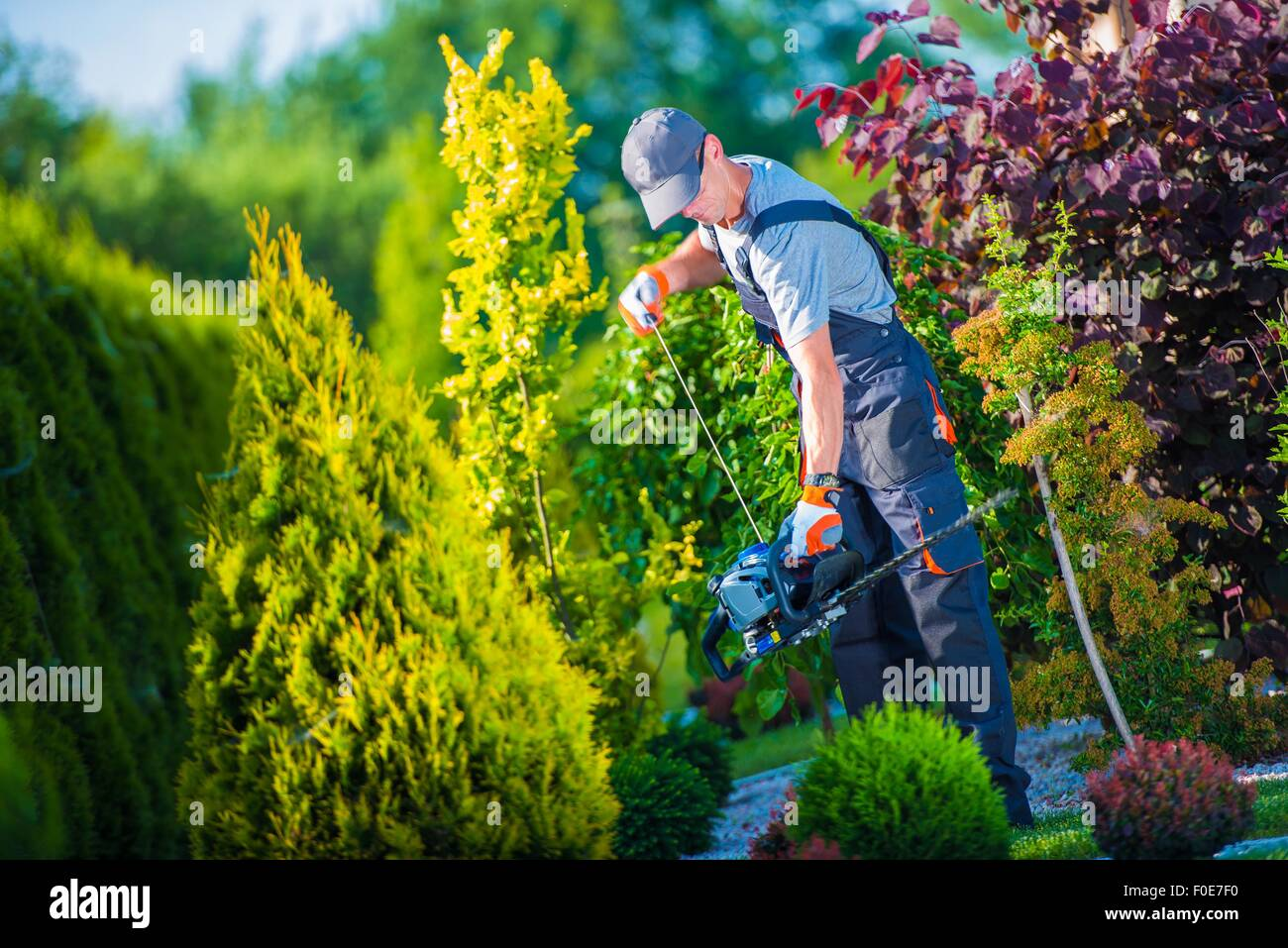 Firing Up Gasoline Hedge Trimmer by Professional Gardener. Garden Works. Trimming Hedge. - Stock Image