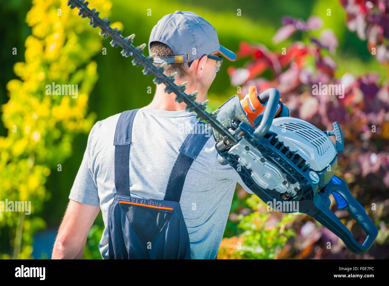 Professional Gardener with Large Gasoline Hedge Trimmer Going to Work. Summer Garden Care. - Stock Image
