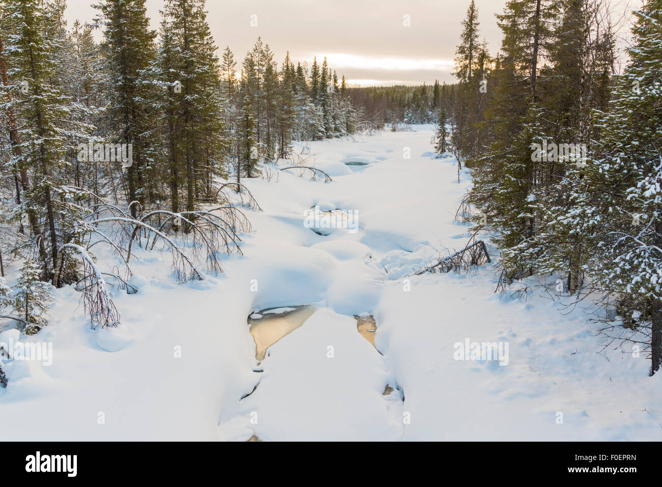 Frozen creek with trees on the side, plenty of snow on the ice, Gällivare, Sweden - Stock Image