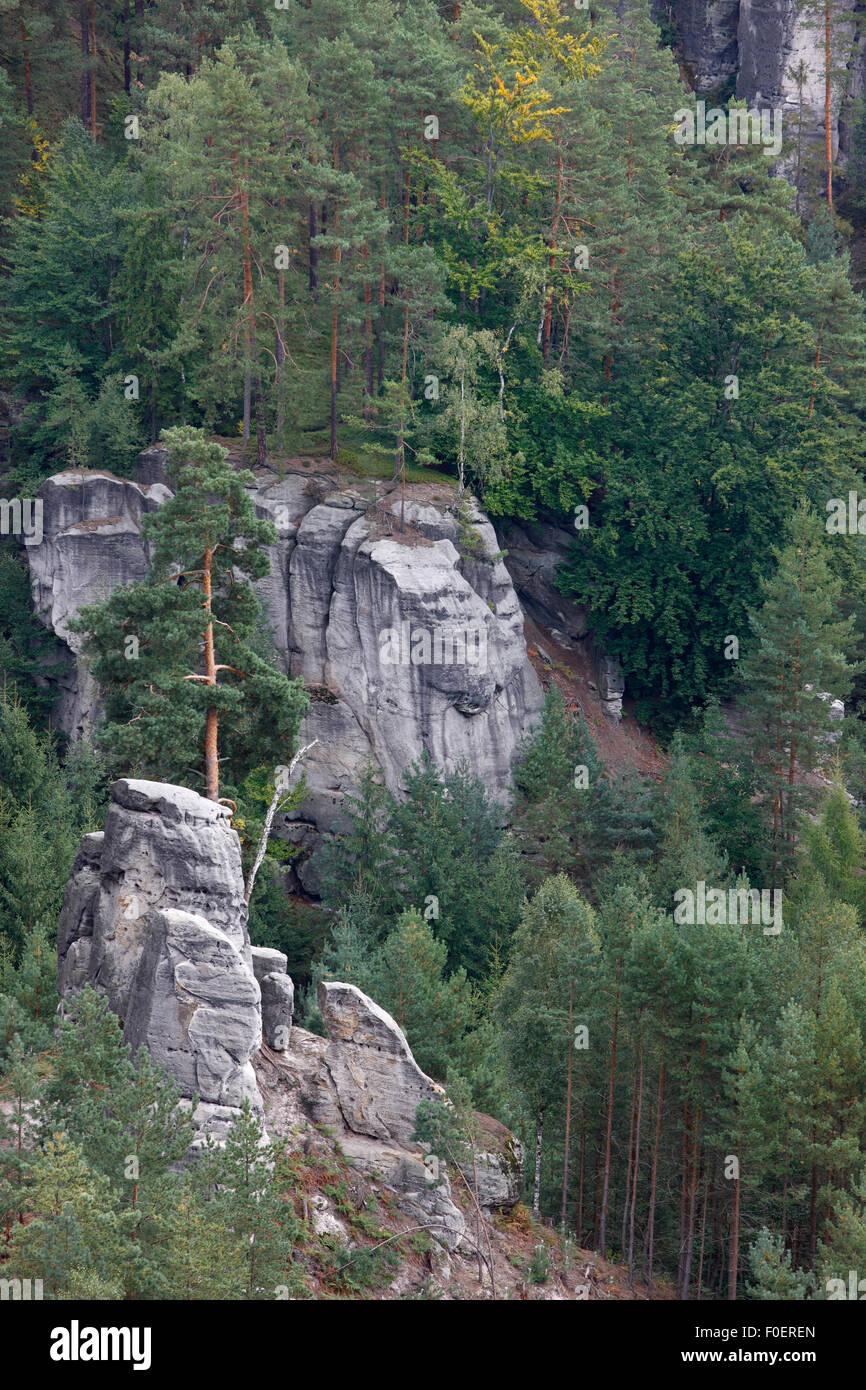 Forest with rocky outcrops, Pohovka, Medvedi Diry, Ceske Svycarsko / Bohemian Switzerland National Park, Czech Republic, - Stock Image