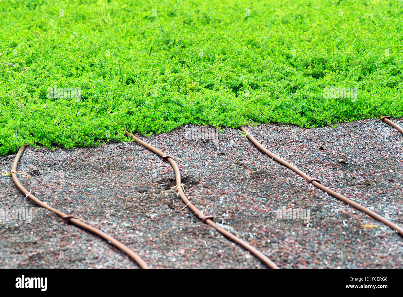 Irrigation pipes on a lawn - Stock Image
