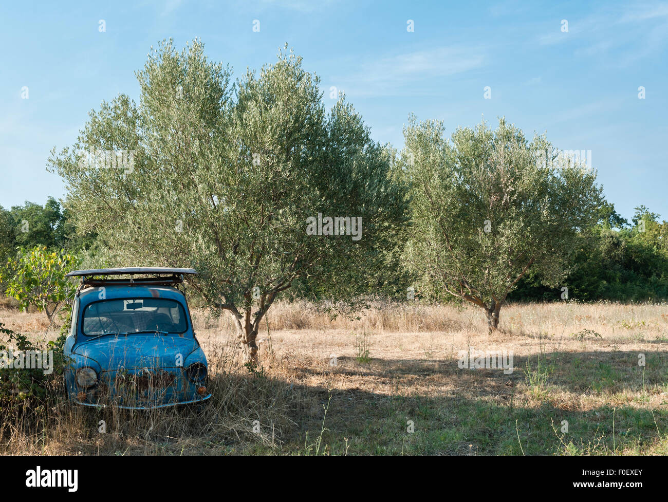 Istria, Croatia. An abandoned car lying in an olive grove on a remote smallholding - Stock Image