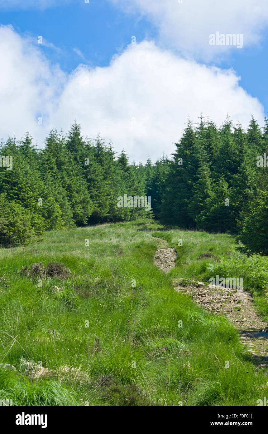Bardrochwood Moor Woodland with Path Leading to the Cairnsmore of Fleet Summit, Dumfries & Galloway, Scotland, - Stock Image