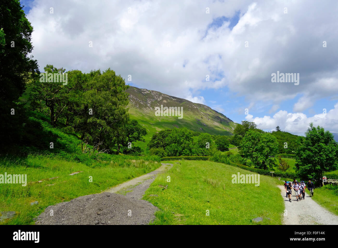 Allerdale Ramble, Borrowdale, Lake District National Park, Cumbria, England, UK in Summer - Stock Image