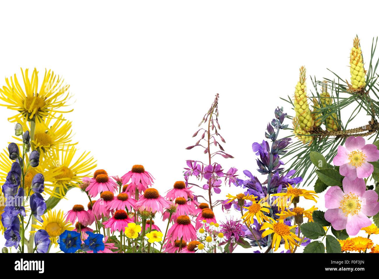 Heilpflanzenarrangement, freisteller - Stock Image
