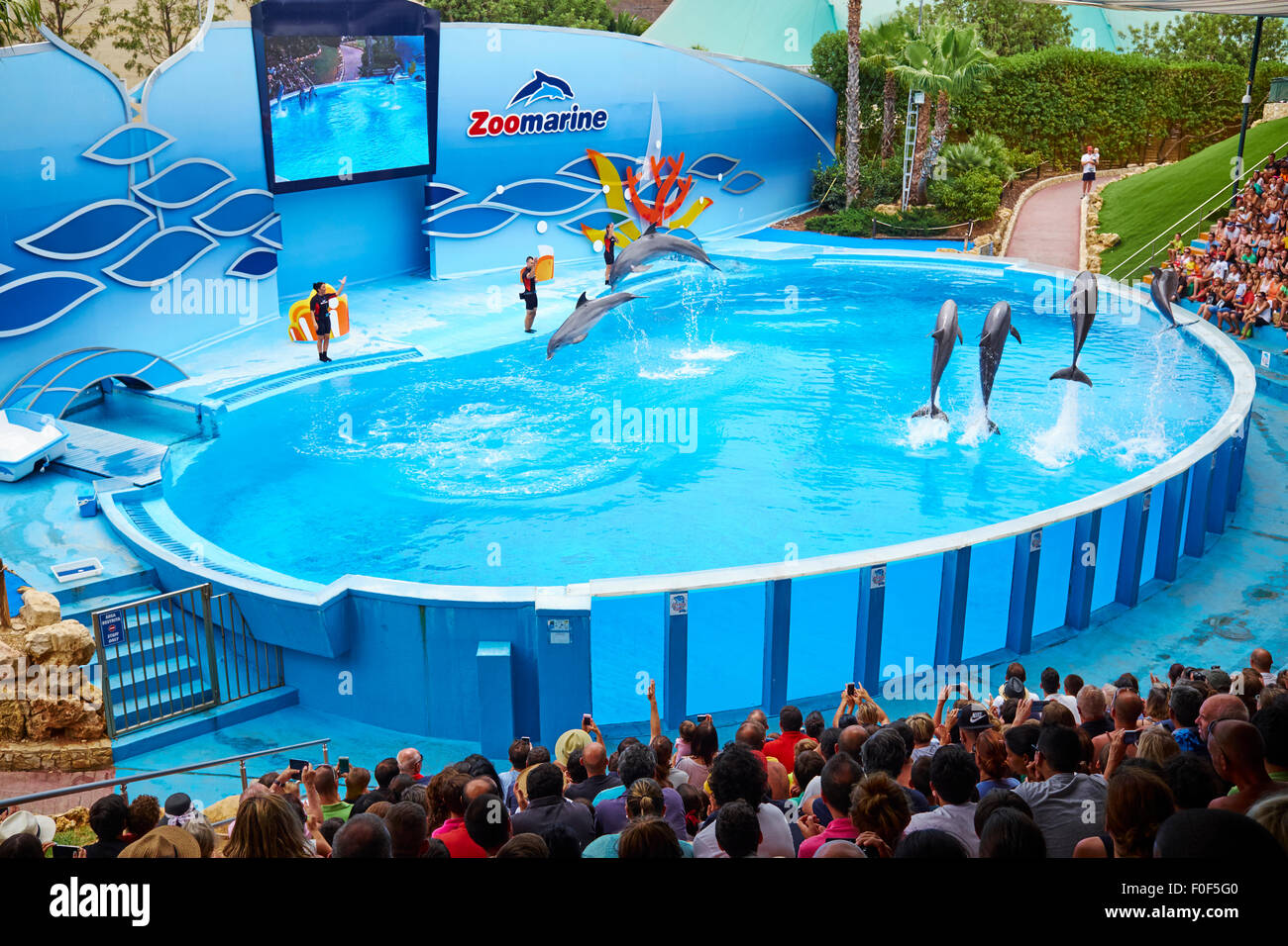 Dolphin Show At The Zoomarine Theme Park Guia Algarve Portugal - Stock Image