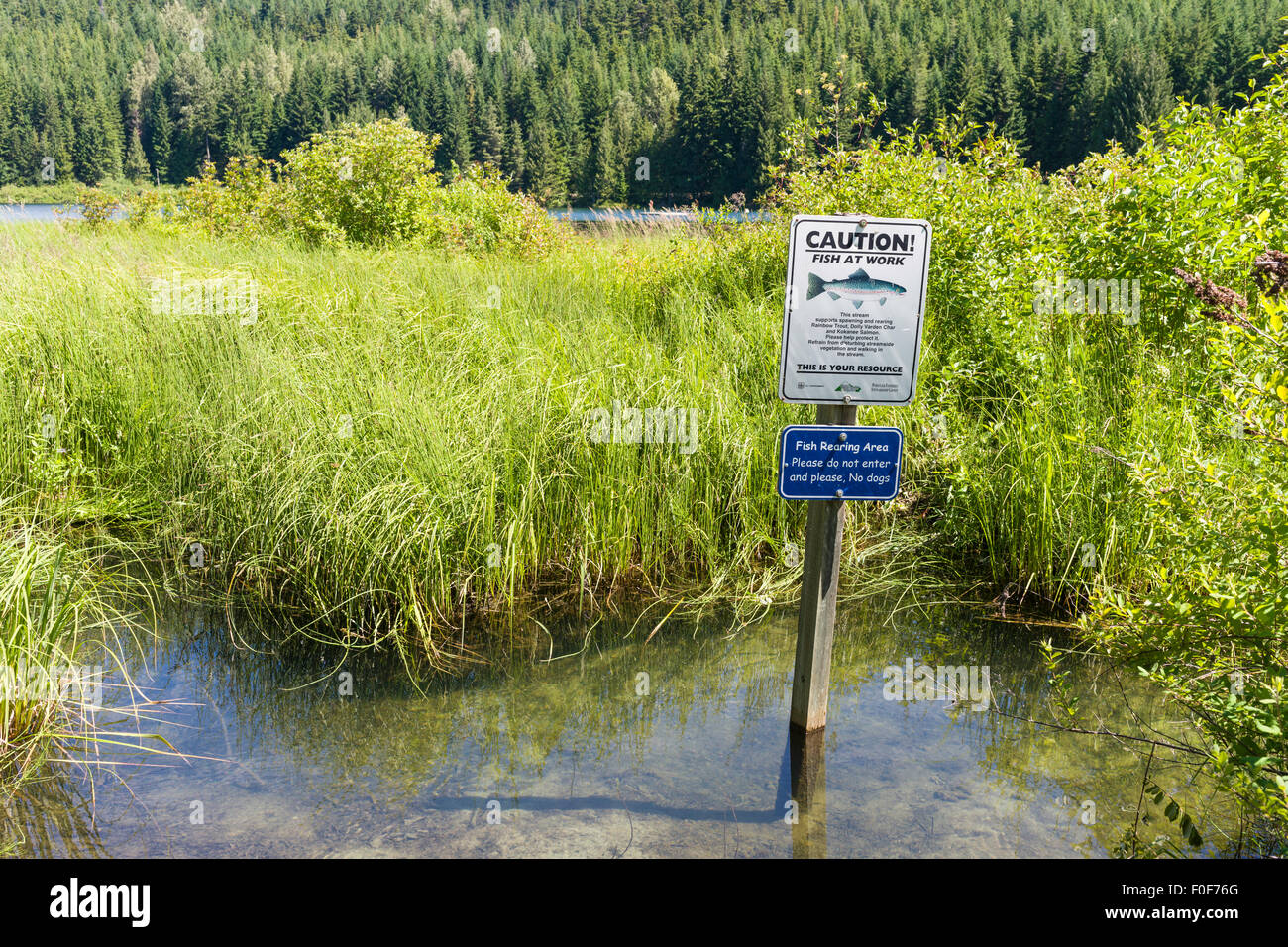 Fish rearing conservation sign near Lost Lake, Whistler, BC, Canada - Stock Image