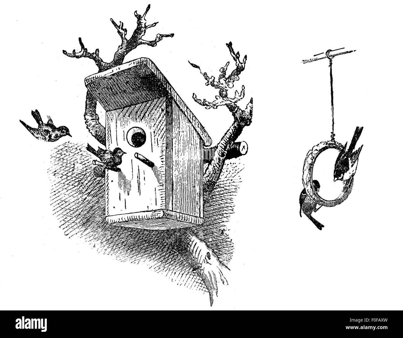 engraving of wooden bird house on tree and birds hanging from a birdseed ring - Stock Image
