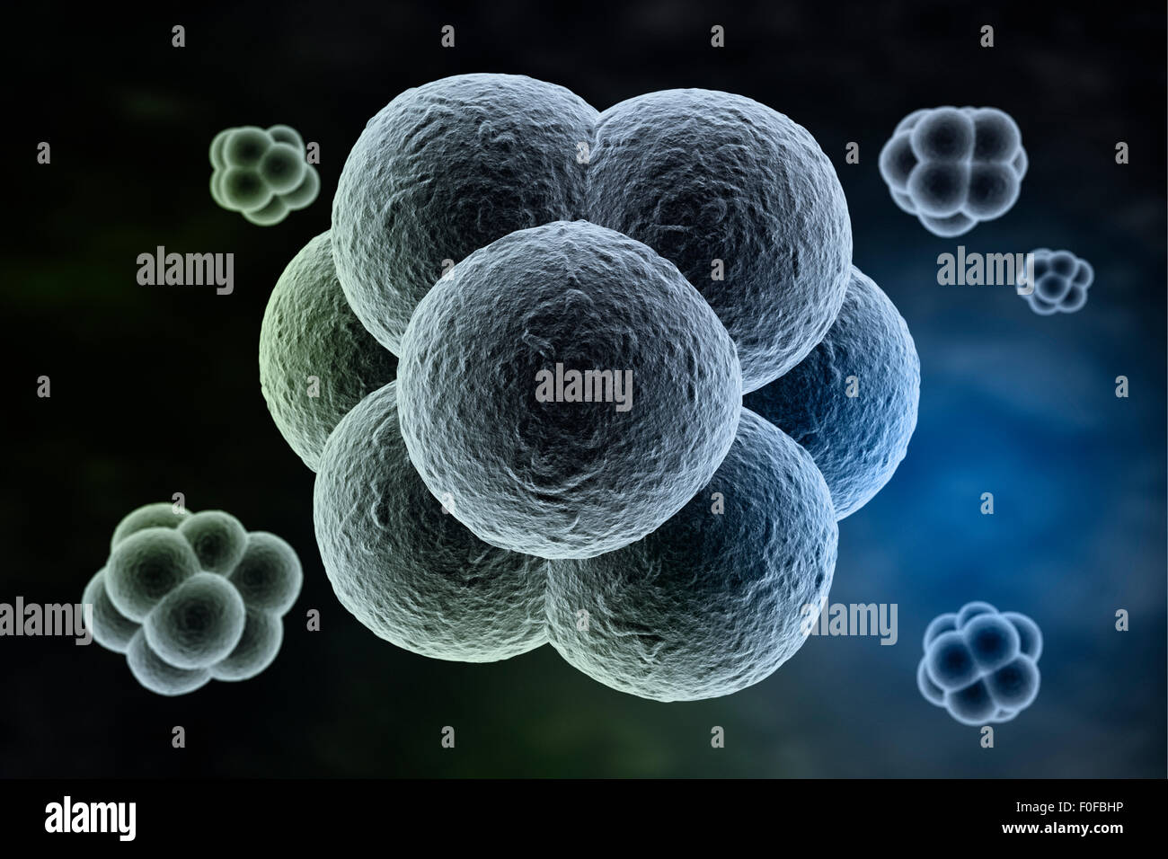 Abstract cells in division phase - Stock Image