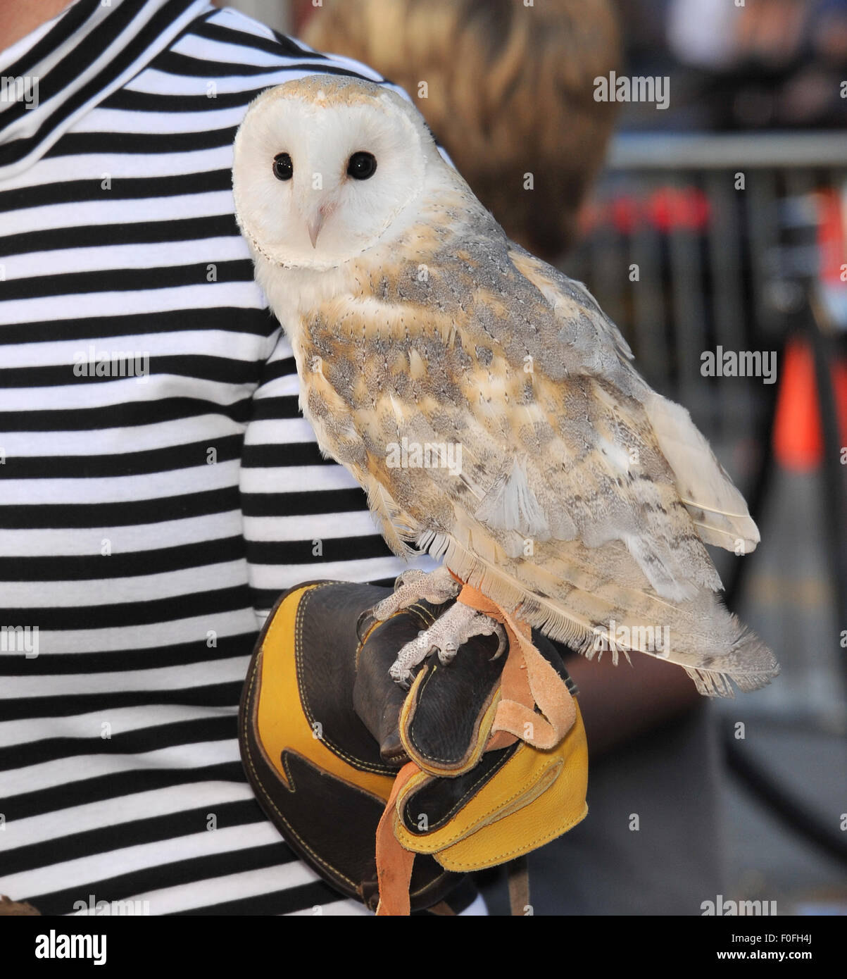 LOS ANGELES, CA - SEPTEMBER 19, 2010: Owl at the world premiere of 'Legends of the Guardians: The Owls of Ga'Hoole' - Stock Image