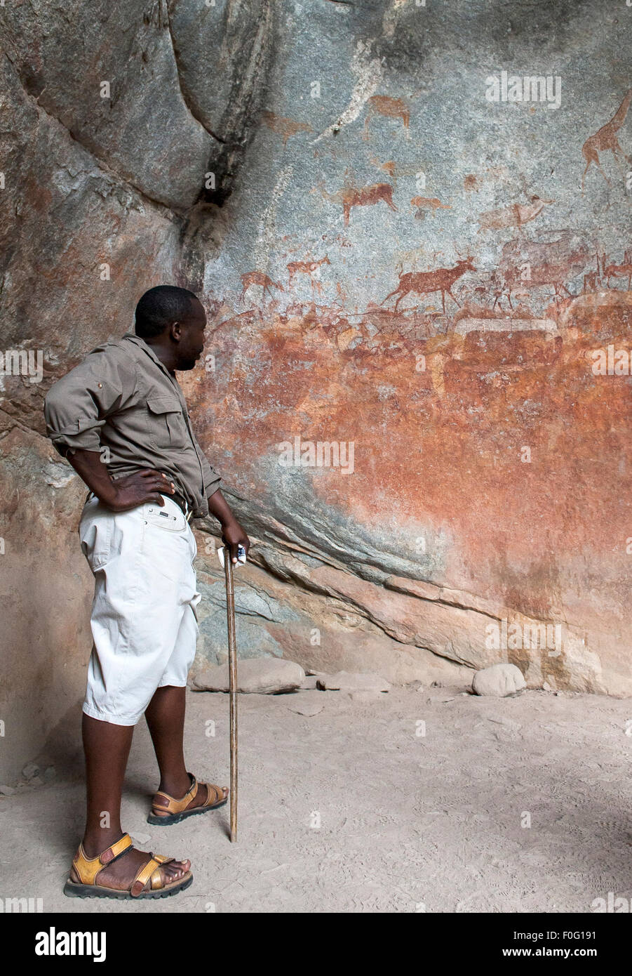 Local guide looking at rock art with animals painted on wall Nswatugi Caves Matobo National Park Zimbabwe Africa - Stock Image