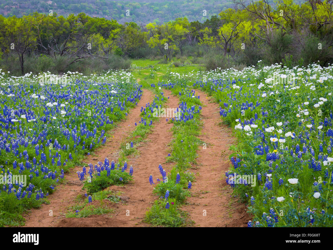 The Texas Hill Country is a twenty-five county region of Central Texas and South Texas - Stock Image