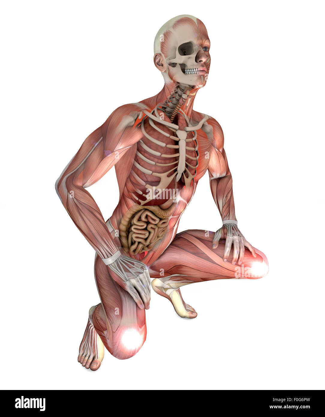 Illustration Of Male Body With Skeletal Muscles And Organs Isolated