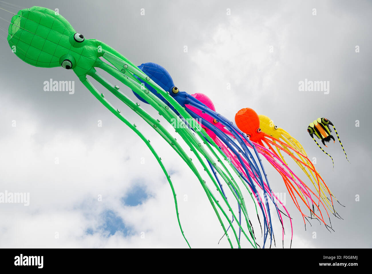 Portsmouth, UK. 15th August 2015. A line of large octopus soft kites fly in the breeze during the International Stock Photo