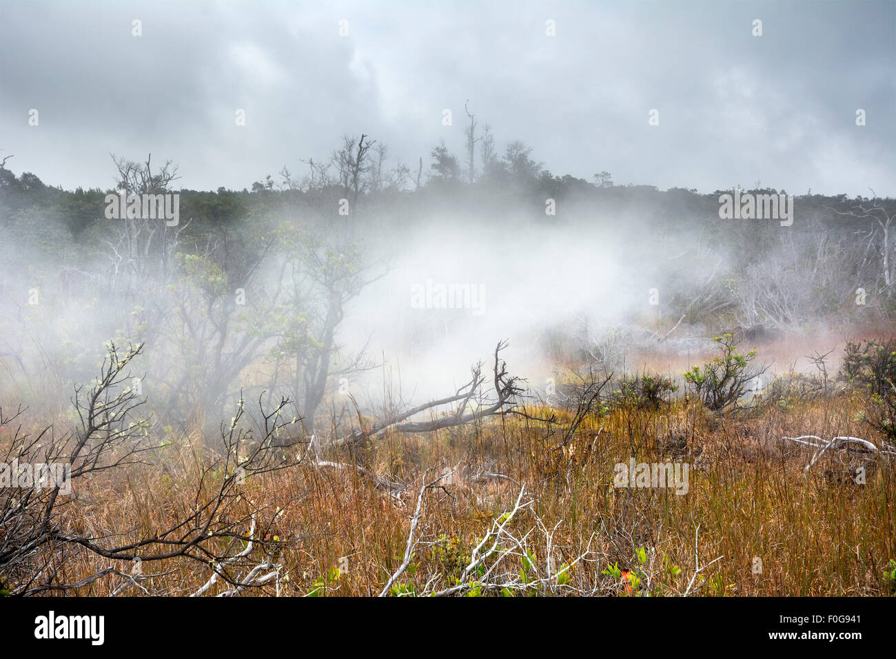 Natural steam rising from volcanic steam vents in the earth at Volcano National Park, Kilauea Hawaii. - Stock Image