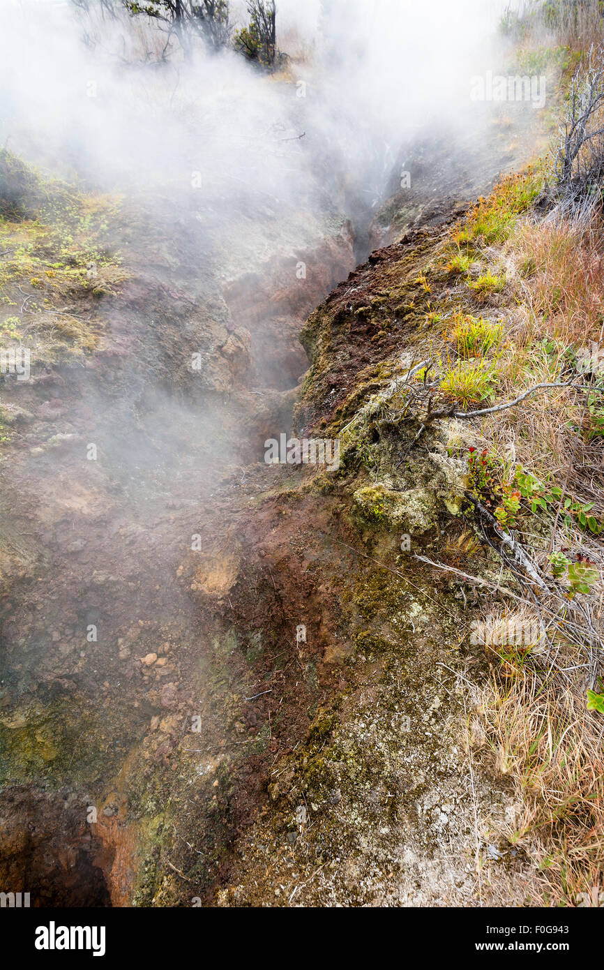 Natural steam rising from volcanic steam vents in the earth at Volcano National Park, Kilauea Hawaii.S - Stock Image
