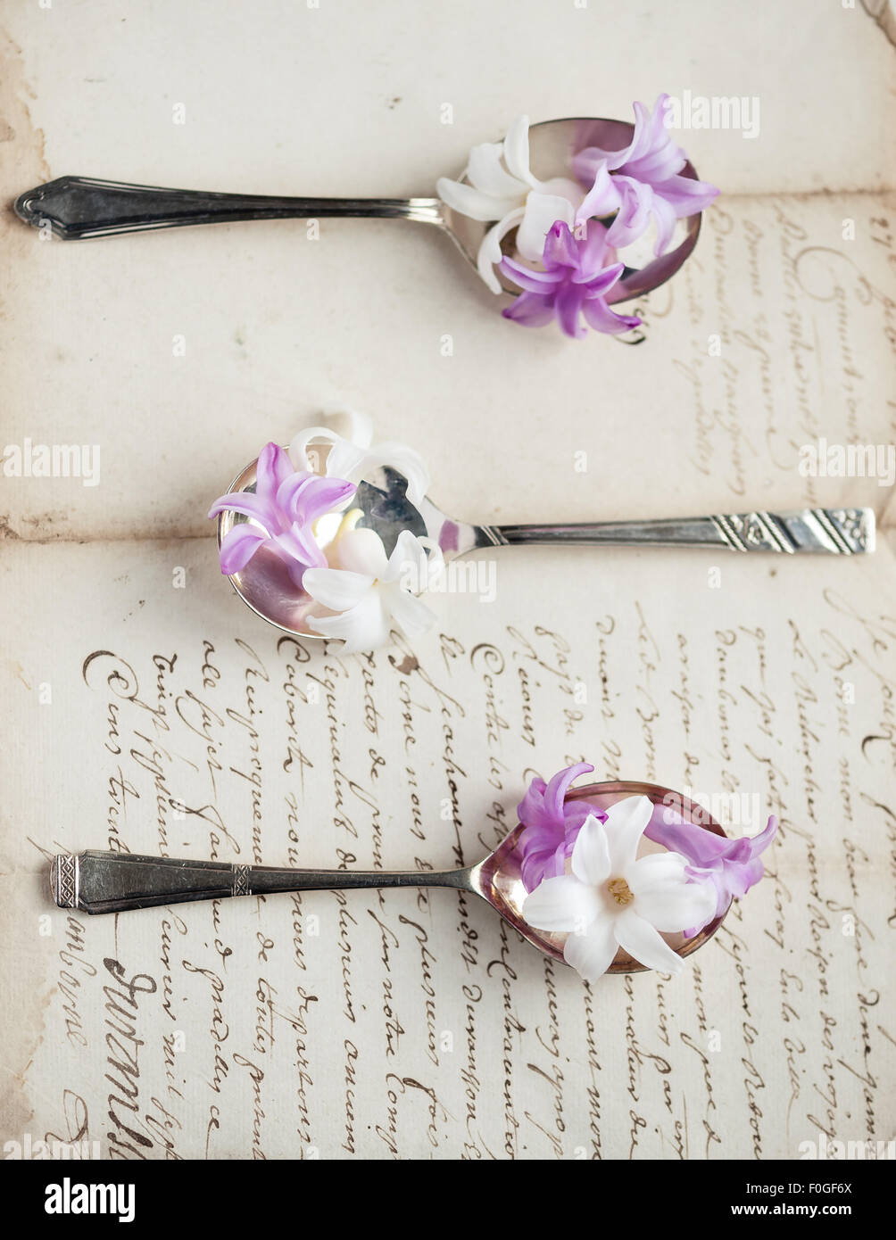 hyacinths on vintage silver spoons on old letter - Stock Image
