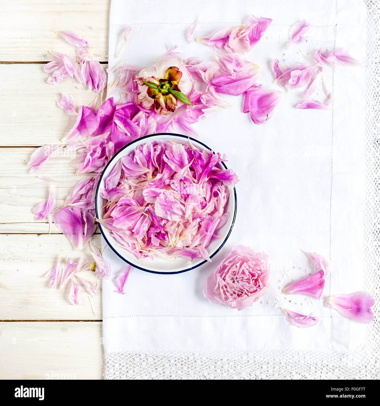 a white plate with pink peony petals on vintage white lace tablecloth - Stock Image